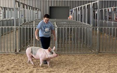 "My Pet ""Pork Chop"""